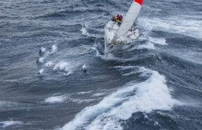 Даже дельфины любят Sydney to Hobart Race!